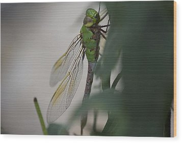Dragonfly Wood Print by Michel DesRoches