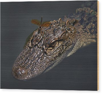 Dragonfly On A Alligators Head Wood Print by Paulette Thomas