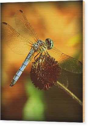Dragonfly On A Dried Up Flower Wood Print by Tam Graff