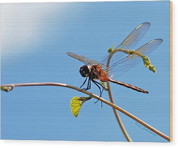 Dragonfly On A Vine Wood Print by Kay Lovingood
