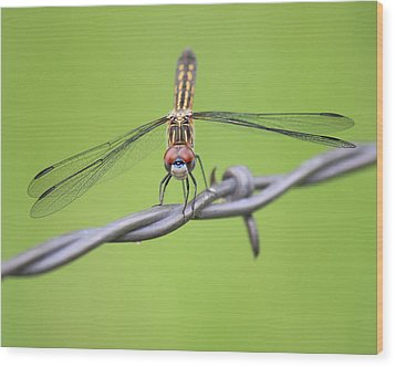 Wood Print featuring the photograph Dragonfly On Barbed Wire by Penny Meyers