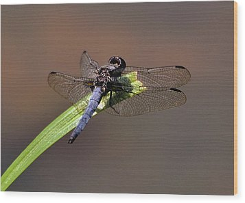 Dragonfly On Goose Feather Pond  - C2121b Wood Print by Paul Lyndon Phillips