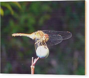 Dragonfly On Sphere Wood Print by Mark Haley