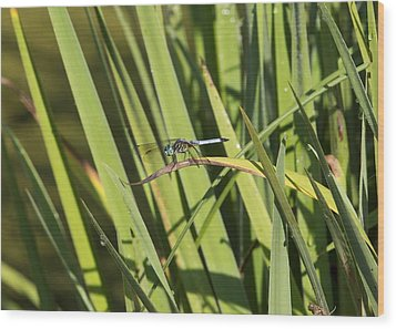 Dragonfly Wood Print by Ron Sgrignuoli