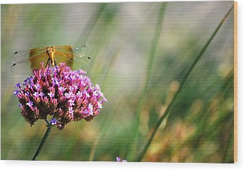 Wood Print featuring the photograph Dragonfly Wings by Amee Cave