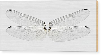 Dragonfly Wings Wood Print by Raul Gonzalez Perez