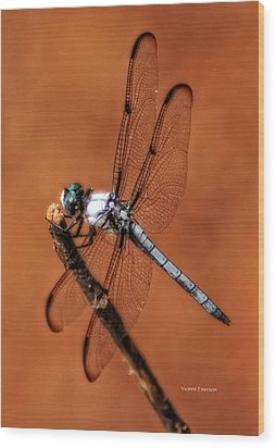 Wood Print featuring the photograph Dragonfly by Yvonne Emerson AKA RavenSoul