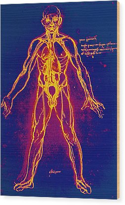 Drawing Of Human Venous System (leonardo Da Vinci) Wood Print by Mehau Kulyk