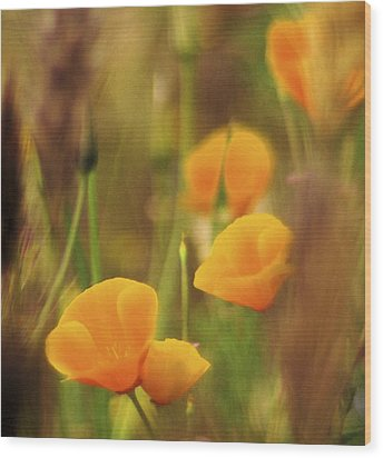 Dream Poppies Wood Print