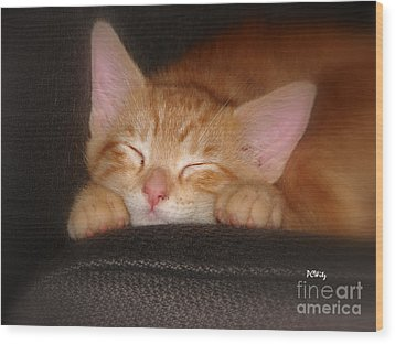Dreaming Kitten Wood Print