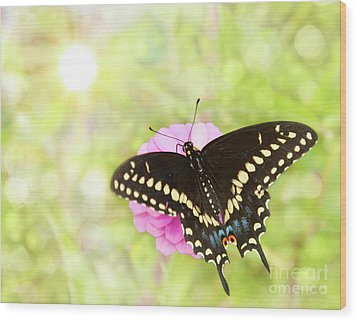 Dreamy Black Swallowtail Butterfly Wood Print