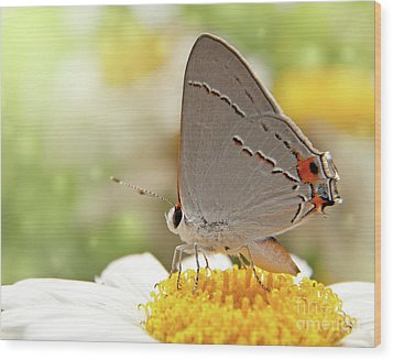 Dreamy Hairstreak Butterfly Wood Print