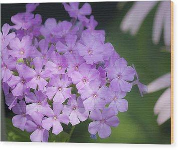 Dreamy Lavender Phlox Wood Print by Teresa Mucha