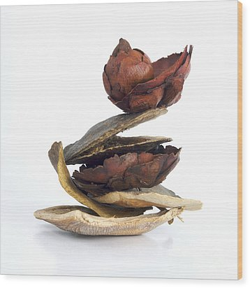 Dried Pieces Of Vegetables Wood Print by Bernard Jaubert