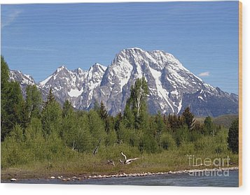 Wood Print featuring the photograph Driftwood And The Grand Tetons by Living Color Photography Lorraine Lynch
