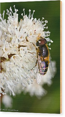 Wood Print featuring the photograph Drone Fly by Mitch Shindelbower