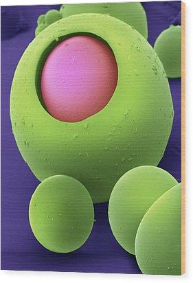 Drug Delivery Microspheres, Sem Wood Print by David Mccarthy