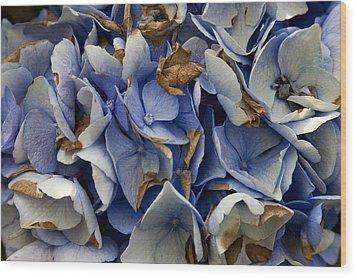 Wood Print featuring the photograph Drying Hydrangea by Michael Friedman