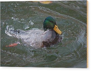 Duck Bathing Series 1 Wood Print by Craig Hosterman