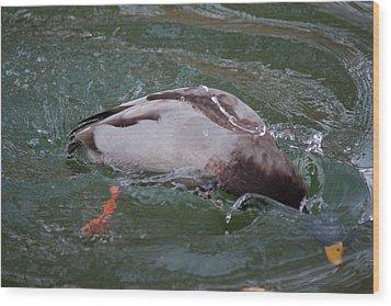 Duck Bathing Series 2 Wood Print by Craig Hosterman