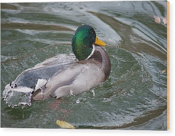 Duck Bathing Series 5 Wood Print by Craig Hosterman