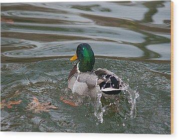 Duck Bathing Series 6 Wood Print by Craig Hosterman