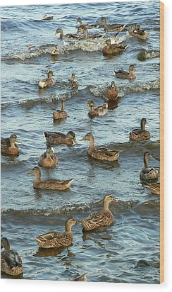 Duck Convention Wood Print by Seiko Ti