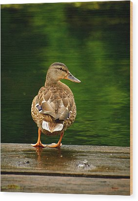 Duck On Dock Wood Print by Andre Faubert