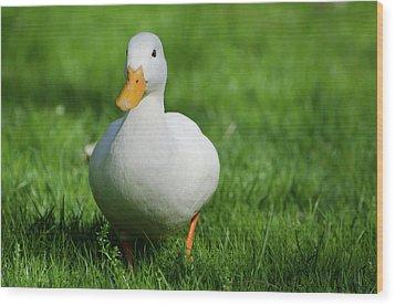 Duck On Grass Wood Print by Mats Silvan