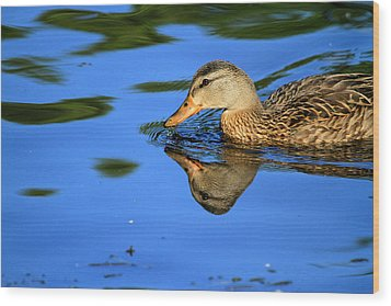 Duck Reflects Wood Print by Karol Livote