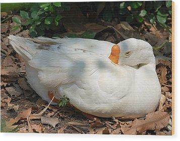 Wood Print featuring the photograph Duck Resting by Fotosas Photography
