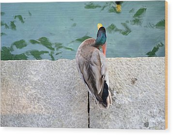 Wood Print featuring the photograph Duck Scratching by Kathleen Pio
