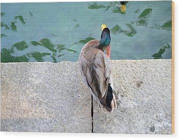 Duck Scratching Wood Print