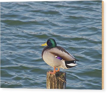 Duck Standing On Stake Wood Print by Xstreephoto