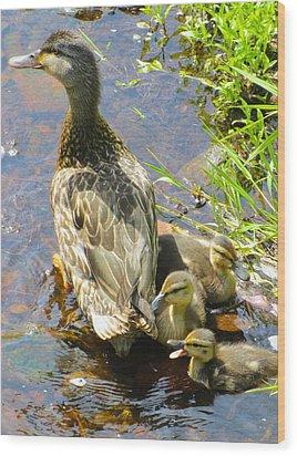 Ducklings Wood Print by Sarah Gayle Carter