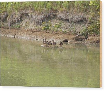 Ducks In A Row Wood Print by Corinne Elizabeth Cowherd
