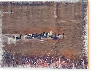 Ducks On Canvas Wood Print by Douglas Barnard