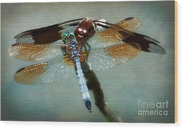 Dueling Dragonflies Wood Print by Susan Isakson