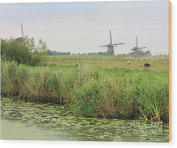 Dutch Landscape With Windmills And Cows Wood Print by Carol Groenen