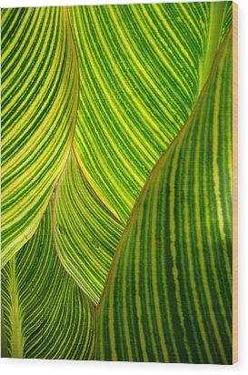 Dwarf Canna Lily Wood Print by Brenda Foran