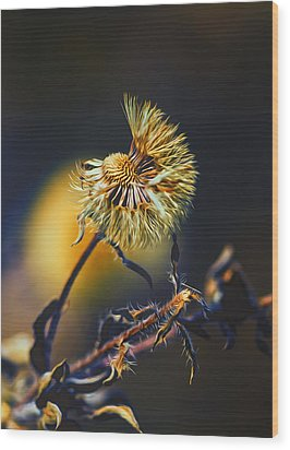 Dying Nature Glow Wood Print by Bill Tiepelman