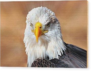 Eagle 21 Wood Print by Marty Koch