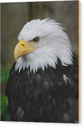 Eagle In Ketchikan Alaska 1371 Wood Print by Michael Bessler
