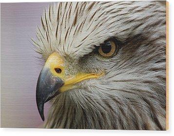 Eagle Wood Print by Javier Balseiro