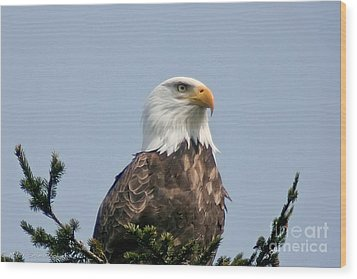 Wood Print featuring the photograph Eagle  by Mitch Shindelbower