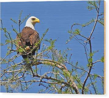Eagle On Watch Wood Print by Kathy Ricca