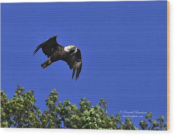 Wood Print featuring the photograph Eagle Over The Tree Top by Randall Branham