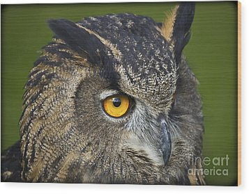 Eagle Owl 2 Wood Print by Clare Bambers