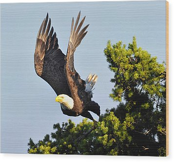 Eagle Takes Off Wood Print by Sasse Photo