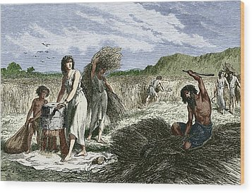 Early Humans Harvesting Crops Wood Print by Sheila Terry